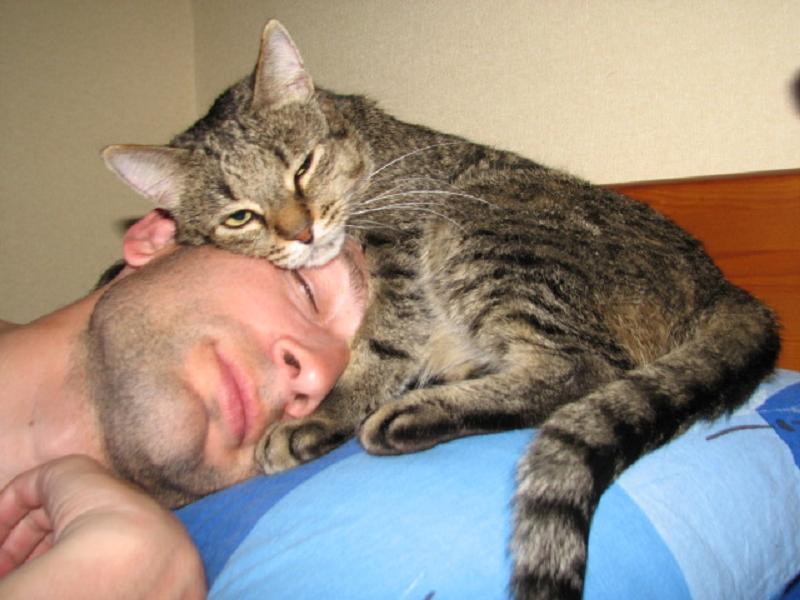 могут заболеть сон в котом ты опаздываешь на свою свадьбу квартиру Московской