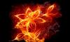 Красный огонь обещает холода, белый — тепло